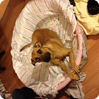 Adopt A Pet :: Dutchess - selden, NY