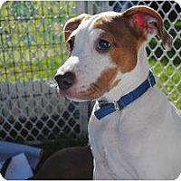 Adopt A Pet :: Isla - Orlando, FL