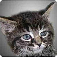 Adopt A Pet :: Abbie - Montgomery, IL