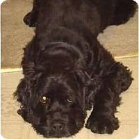 Adopt A Pet :: COAL - Tacoma, WA