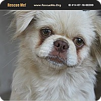 Adopt A Pet :: Ashton - Van Nuys, CA