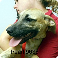 Adopt A Pet :: Pearl - baltimore, MD