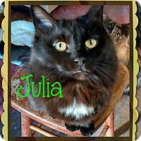 Adopt A Pet :: Julia - Fairbury, NE