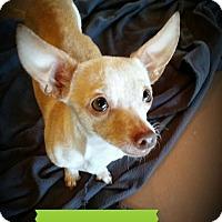 Adopt A Pet :: Bonita - Weatherford, TX
