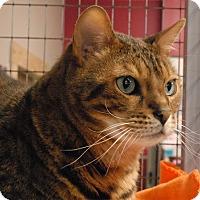 Adopt A Pet :: Max - Winchendon, MA