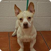 Adopt A Pet :: Junior - Miami, FL
