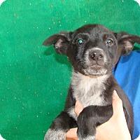 Adopt A Pet :: Foxy - Oviedo, FL
