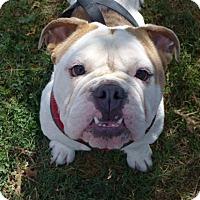 Adopt A Pet :: Zachary - Santa Ana, CA