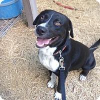 Adopt A Pet :: Black Jack - Groveland, FL