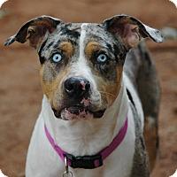 Adopt A Pet :: Skyler - Lawrenceville, GA