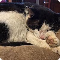 Adopt A Pet :: Leonzo - Grand Ledge, MI