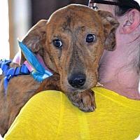 Adopt A Pet :: Lexie - Albemarle, NC