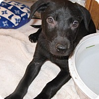 Adopt A Pet :: Horsethooth - Fort Collins, CO