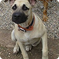 Adopt A Pet :: Sampson - Clear Lake, IA