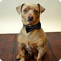 Adopt A Pet :: Abner - McKinney, TX