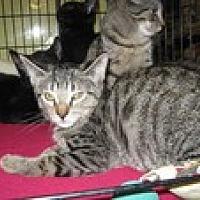 Adopt A Pet :: Hialeah - Arlington, TX