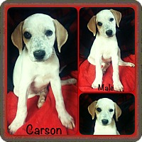 Adopt A Pet :: Carson meet me 9/9 - Manchester, CT