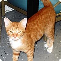 Adopt A Pet :: Melissa - Kalamazoo, MI