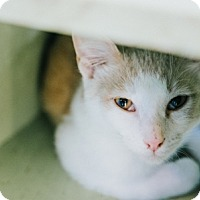 Adopt A Pet :: Banana's Foster - Indianapolis, IN