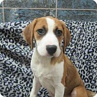 Adopt A Pet :: Nick - Bartonsville, PA