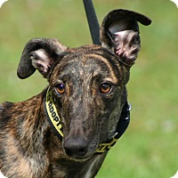 Adopt A Pet :: Thomas - West Palm Beach, FL