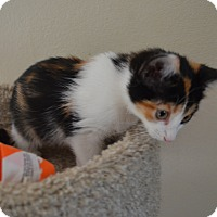 Adopt A Pet :: Lilly - Statesville, NC