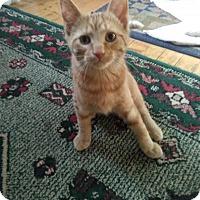 Adopt A Pet :: Wreck it - Sauk Rapids, MN