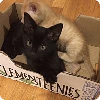 Adopt A Pet :: Austen - Chapel Hill, NC