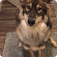 Adopt A Pet :: cookie - Sun valley, CA