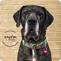 Adopt A Pet :: Sherman 2.0 - Mooresville, NC