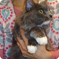 Adopt A Pet :: Sophie - Wildomar, CA