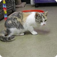 Adopt A Pet :: Lulu - Durand, WI