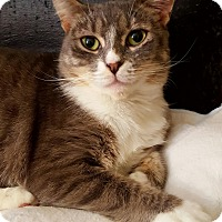 Adopt A Pet :: Downy - Salisbury, MA