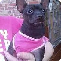Adopt A Pet :: Tinkerbell - Louisville, KY