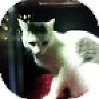 Adopt A Pet :: Jacob - Vancouver, BC