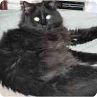 Adopt A Pet :: Ephraim - Pasadena, CA