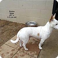 Adopt A Pet :: Brinks - Gadsden, AL