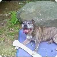 Adopt A Pet :: Sam - Wapwallopen, PA