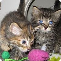 Adopt A Pet :: Charity - Dallas, TX