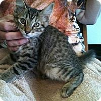 Adopt A Pet :: Lulu - Phoenix, AZ