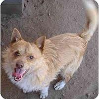 Adopt A Pet :: McGruff - Fowler, CA