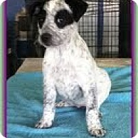 Adopt A Pet :: Rainy - Staunton, VA
