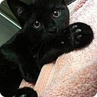 Adopt A Pet :: lil Wayne - Richboro, PA