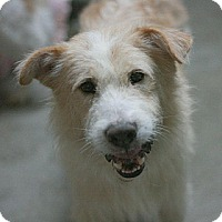Adopt A Pet :: Casey - Canoga Park, CA