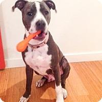 Adopt A Pet :: Blueberry - Austin, TX