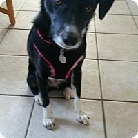 Adopt A Pet :: Molly - Homer, NY