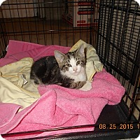 Adopt A Pet :: Falina - Wellington, OH