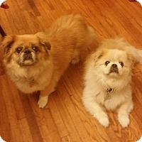 Adopt A Pet :: SAYDEY AND SABRINA - SO CALIF, CA