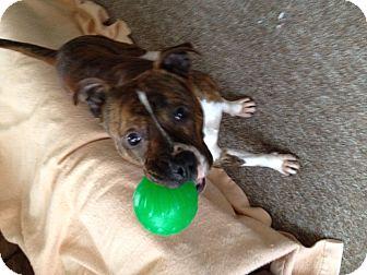 Dog Rescue Glenview Il