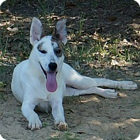 Adopt A Pet :: Hidey - SOUTHINGTON, CT